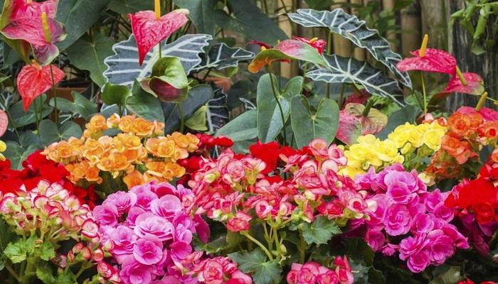 6 plantas que florecen en invierno, ¡La número 5 te sorprenderá!