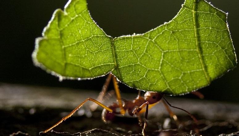 Control de Plagas en Hormigas