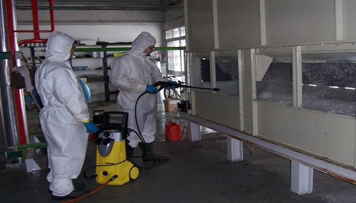 desinfección de plagas profesional