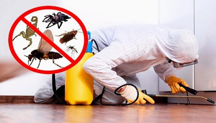 Las 15 Mejores Empresas de Control de Plagas en España