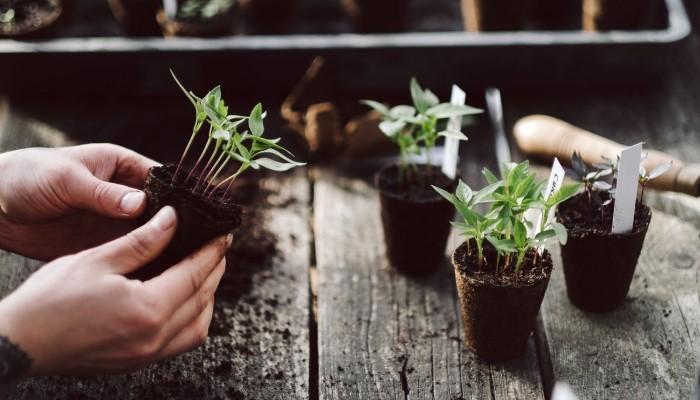 Guía Simple para Jardinería Orgánica – ¿Cómo Comenzar un Huerto Orgánico?