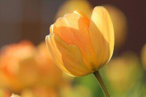 20 Plantas con FLORES AMARILLAS 【TOP de Cuidados】+ FOTOS