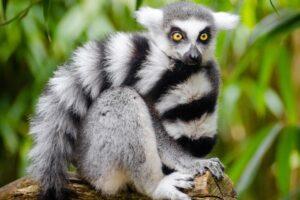 Los Animales en Mayor Peligro de Extinción 【Lista TOP 2020】