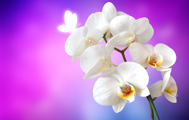Orquídea- Plantas para interiores oscuros