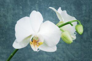 Plantas para INTERIORES OSCUROS【TOP 5】de las más resistentes