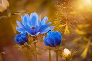 Tipos de Flores【Las más Bellas para el Jardín】+ FOTOS