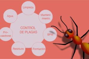 CONTROL DE PLAGAS EN SALAMANCA 【Guía actualizada en 2020】