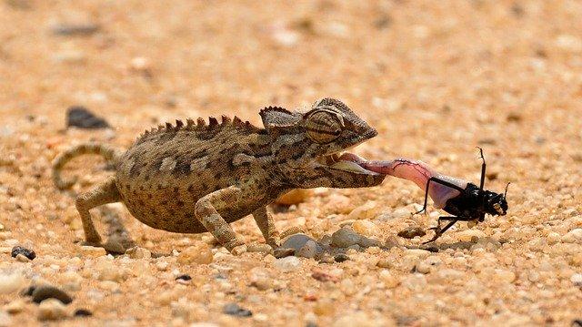 Reptiles de la sabana africana