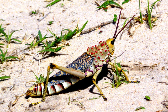 Insectos de la Sabana Africana