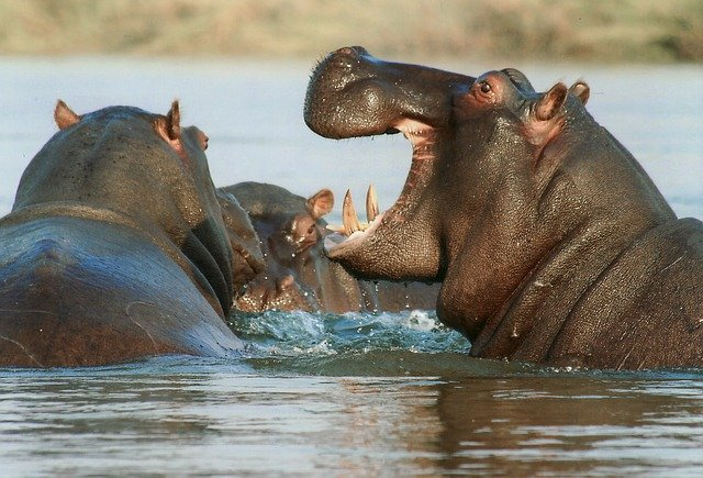 Mamiferos que Viven en la Sabana Africana