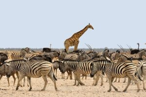 Qué Animales Viven en la Sabana Africana 【GUÍA COMPLETA】