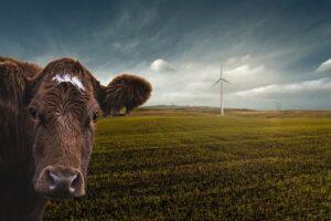 Ventajas y Desventajas de la Energía Eólica 【ENERGÍA RENOVABLE】