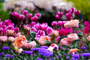 Plantas que FLORECEN TODO el AÑO【TOP 11】+ Galería de FOTOS