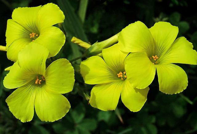 Begonia- Flores todo el año