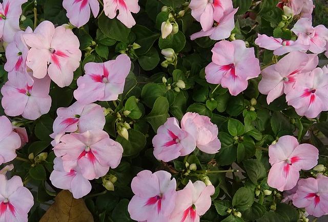 Flores Alegrías todo el año