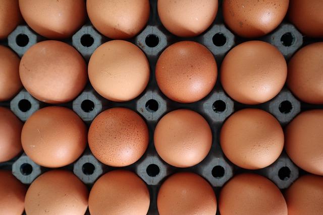 cartón de huevos ecológicos
