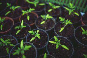 Alimentos Ecológicos 【ACTUALIZADO】Definición y Ejemplos