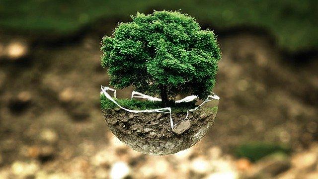 planta ecológica