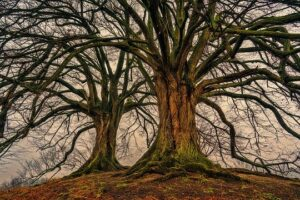 Árboles para reforestar TOP 12 【ACTUALIZADO】