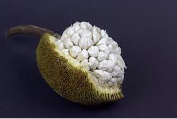 fruta tropical exótica Marang