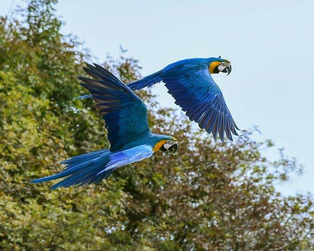 animales con plumas volando