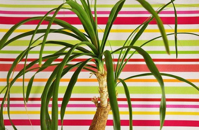 planta pata de elefante tras fondo de colores