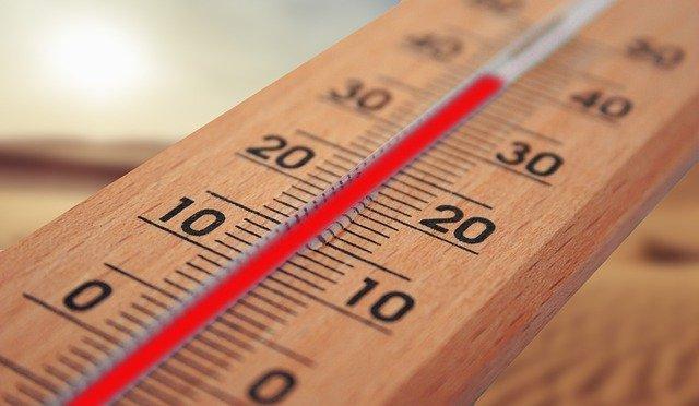 medidor de temperatura para la flor de navidad
