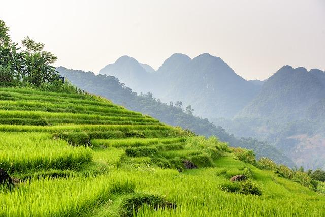 gestión ambiental en reserva de arroz