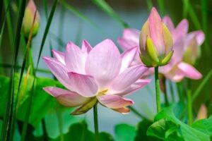 Las Flores Más Exóticas del Mundo TOP 9【ACTUALIZADO】