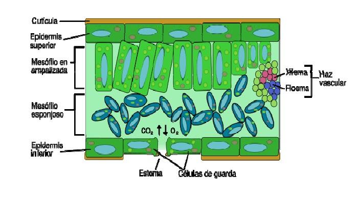 Estructura vegetal