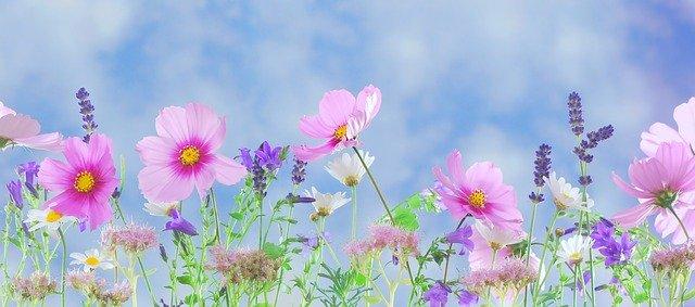 partes de una planta flores