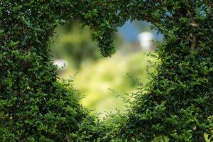 PARTES de una PLANTA ¿Cuáles Son?【TODA LA INFORMACIÓN】