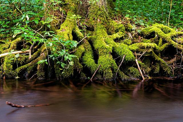 raíces con musgo
