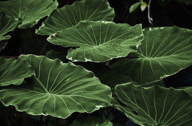 partes de una planta hojas