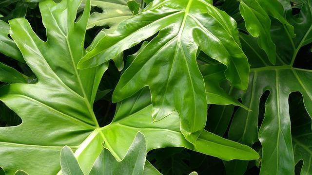 Hojas verdes de gran tamaño