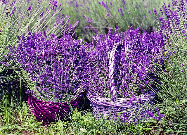 cesta de flores lavanda