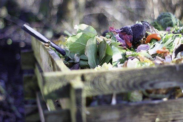abono para planta lavanda en maceta