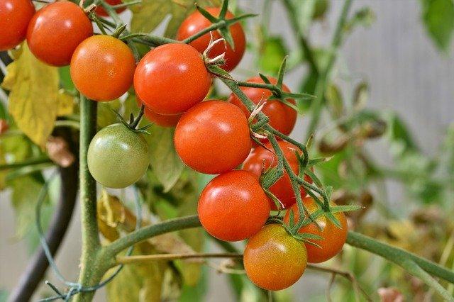 tips para podar tomates