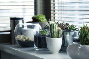 «Tipos de Cactus»【LISTA TOP MUY INTERESANTE】