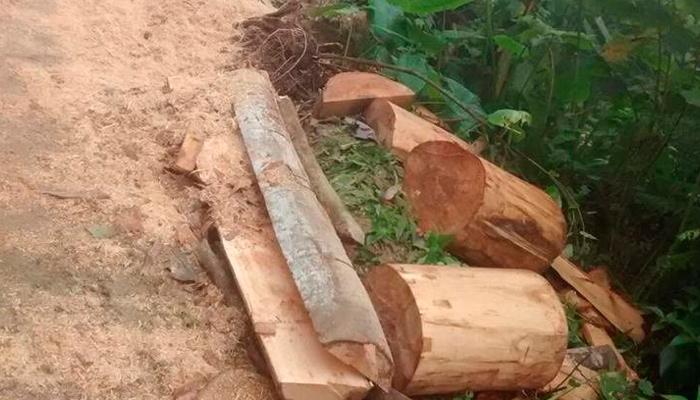 Tala indiscriminada de árboles en los bosques
