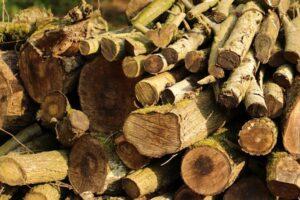 El Problema de la Tala Indiscriminada de Árboles en los Bosques 【2020】