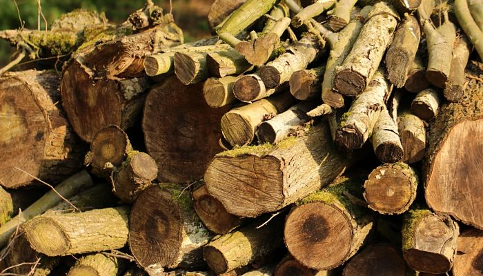 la tala de árboles
