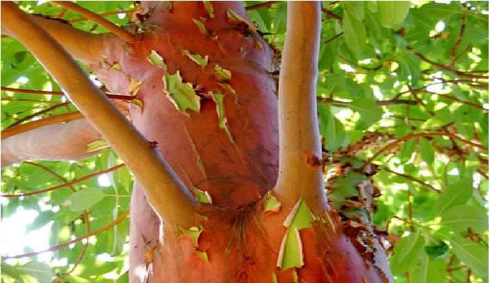 partes de una planta y su función