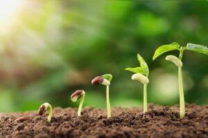 Partes de una PLANTA y sus FUNCIONES【Guía Completa】