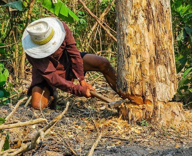 causas de la pérdida de la biodiversidad - deforestación