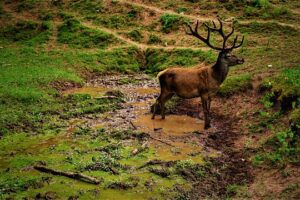 Pérdida de la Biodiversidad –  Causas y Consecuencias【2020】
