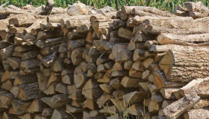 Qué es la silvicultura o explotación forestal